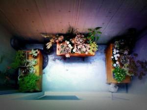 kyara_garden